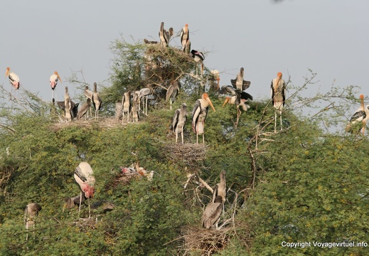 Bharatpur भरतपुर : Keoladeo Ghana National Park
